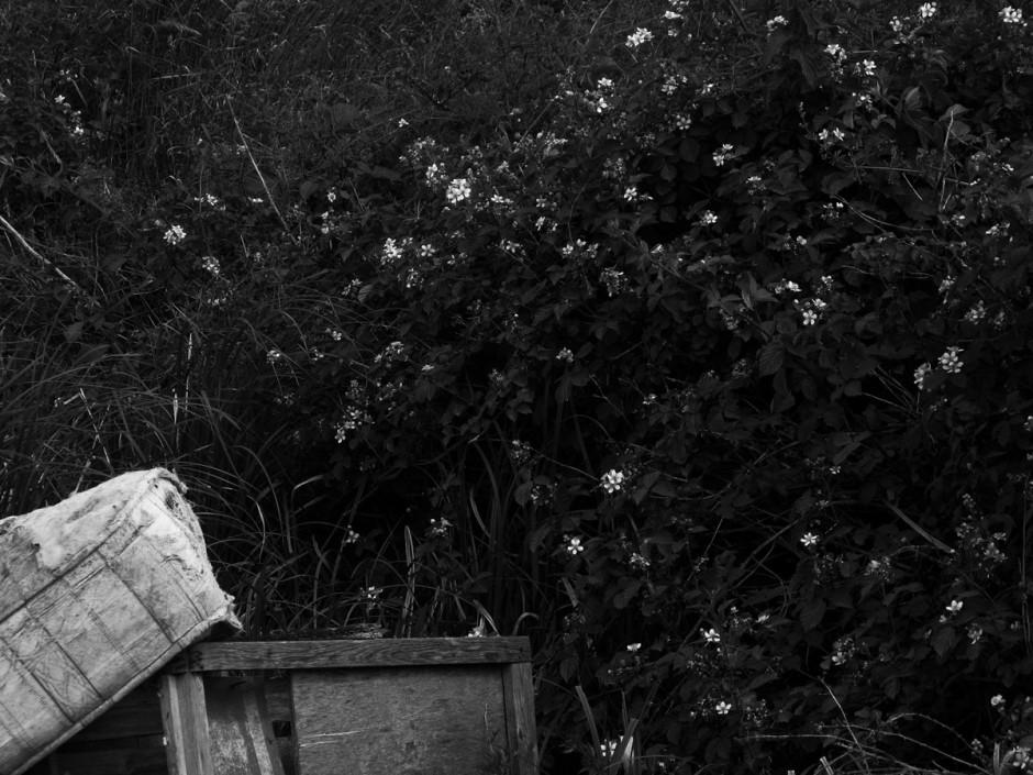 Mandy Williams Riverbed 7